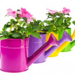 Watering cans with flowers — Stock Photo