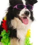 Vacation dog — Stock Photo #6082155