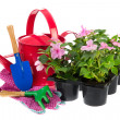 Tray Busy Lizzie plants with gardening equipment — Stock Photo