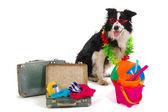 Travel dog — Stock Photo