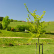 Spring in the Haute Vienne - Stock Photo
