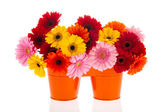 Orange buckets with colorful flowers — Stock Photo