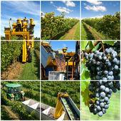 Vineyard Collage — Foto de Stock