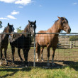 Horses at the Gate — Stock Photo #5928054