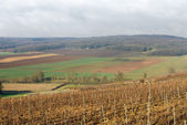 Vineyards, Champagne, France — Stock Photo