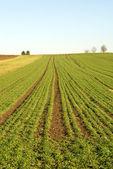 Landsbygdens scen, tyskland — Stockfoto