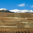 Hillside Vineyards - Stock Photo