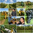Wine Production — Stock Photo #5935390