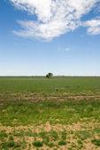 Escena rural — Foto de Stock