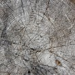 Section of tree trunk — Stock Photo #6378211