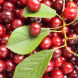 Cherries — Stock Photo #6184884