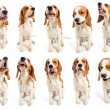 Beagle — Stock Photo #6722575