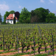 Stock Photo: Swiss farms and vineyards
