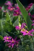 庭の花 — ストック写真