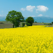 Stock Photo: Swiss farms and meadows