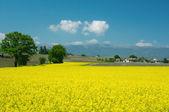 Swiss gospodarstw i łąki — Zdjęcie stockowe