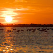 Landscape with sunset and flamingos — Stock Photo