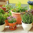 Terrace or roof gardening — Stock Photo #5397724