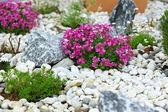 Rock garden — Stockfoto