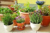 阳台或屋顶园艺 — 图库照片