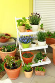 Terrace or roof gardening — Stock Photo
