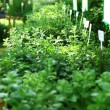 Herbs on the market - 图库照片