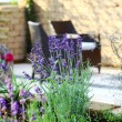 Lavender in garden — Stock Photo
