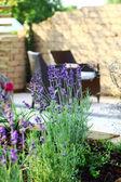 Lavendel im garten — Stockfoto