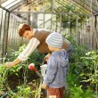 Gardening with granny — Stock Photo