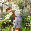 Gardening with granny - Stock Photo