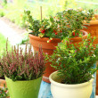 Outdoor flower pots - Stock Photo