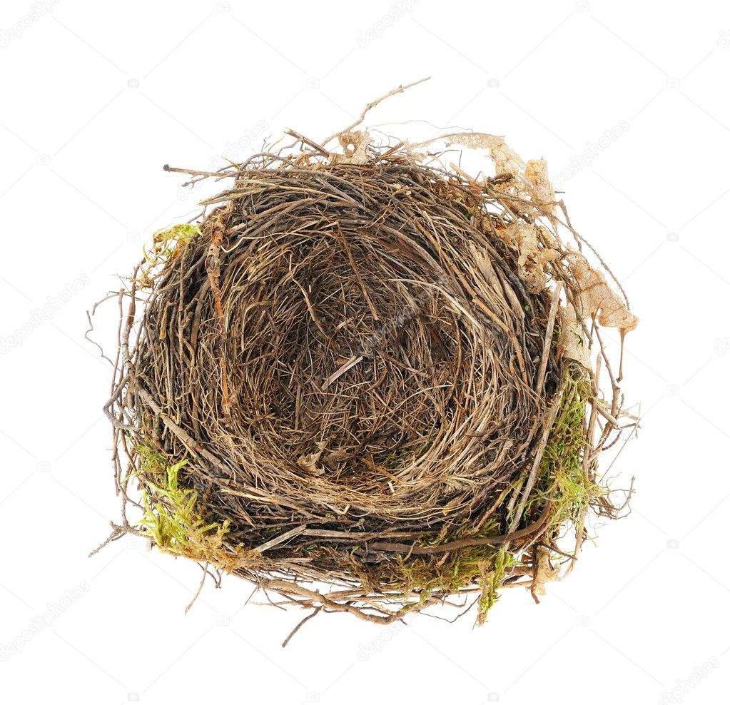 Detail of blackbird nest isolated on white — Stock Photo #5465021