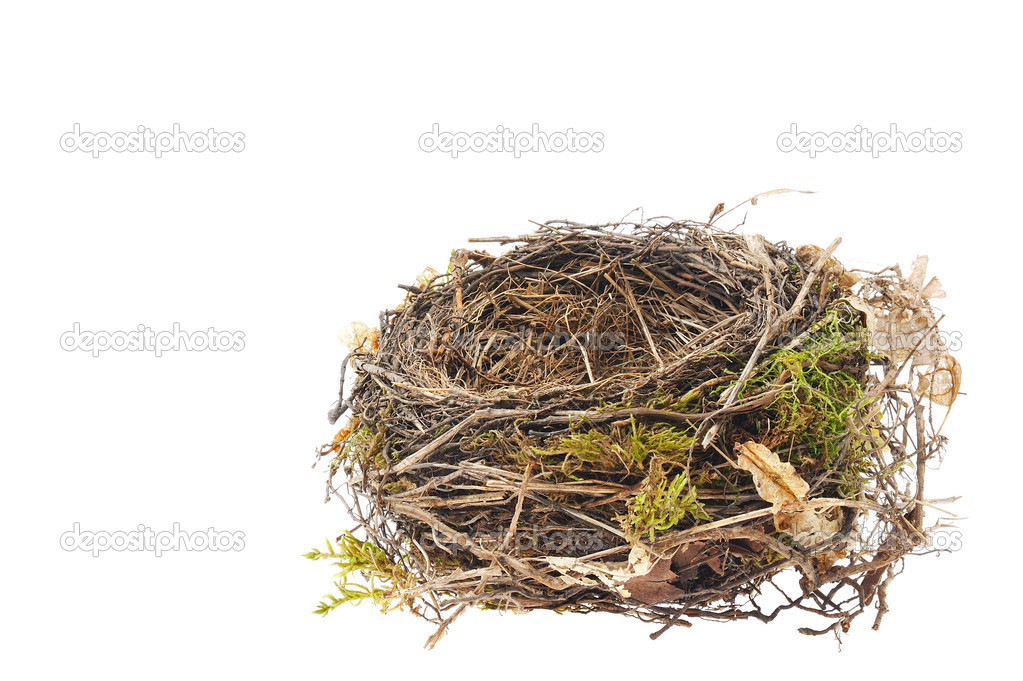 Detail of blackbird nest isolated on white — Stock Photo #5465051