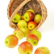 Fresh apples spilling out of basket - isolated on white background. Clippin — Stock Photo #5897333