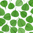 Skeletal leaves on white - background. Clipping path included. — Photo