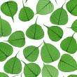 Skeletal leaves on white - background. Clipping path included. — Stock Photo