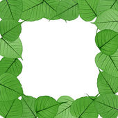 Skeletal leaves on white background - frame . Clipping path included. — Stock Photo