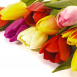 Bunch of tulips — Stock Photo #5441842