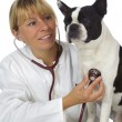 Female vet doctor — Stock Photo #5939054