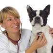 Female vet doctor — Stock Photo #5939058