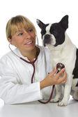 Female vet doctor — Stock Photo