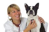 Médico veterinario femenina — Foto de Stock