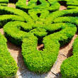 Stock Photo: Garden maze