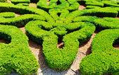 Garden maze — Stock Photo