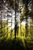 Sunburst through a wooded area — Stock Photo