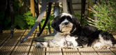 Dog laying on decking in the sun — Stock Photo