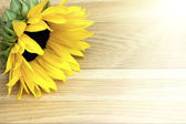 Sunflower laying on a wooden table — Stock Photo