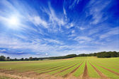 Farmland furrows in perspective with blue skies — Stock Photo