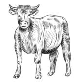 Bufallo — Stock Vector