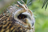 Sitting Owl — Stock Photo